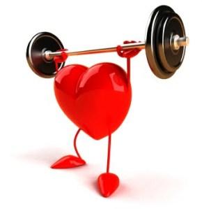 Heart Muscles